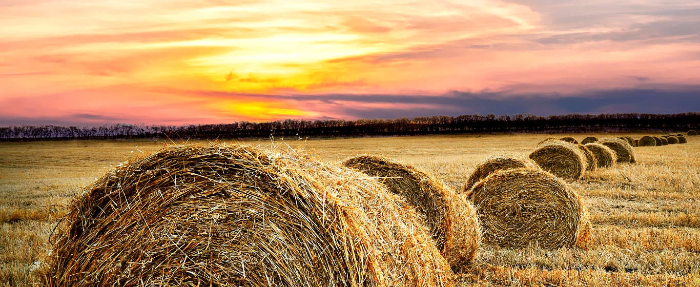http://noclegi.agro.pl/wp-content/uploads/baner/agroturystyka.jpg